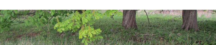 Bevarandevärda träd