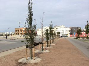 bild trädplantering