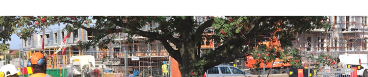 Temadag Träd